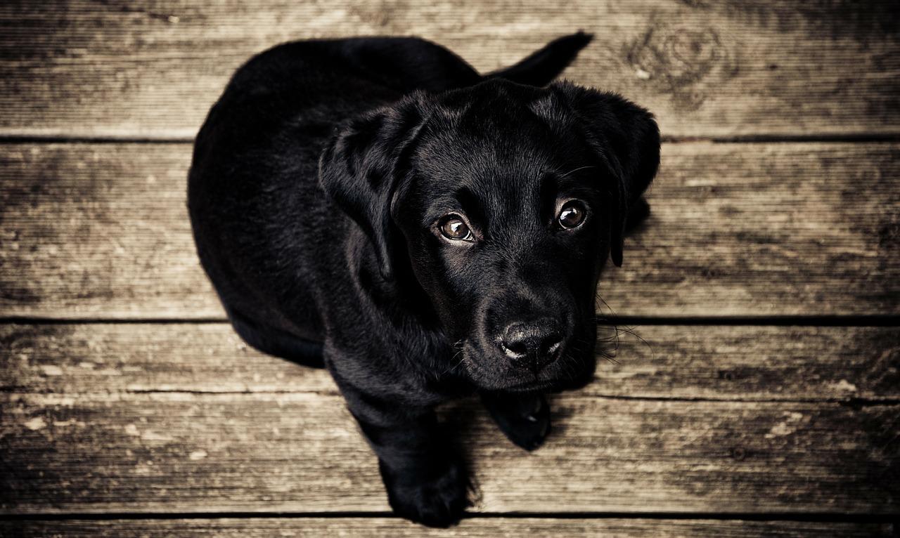 Jak wybrać psa dla siebie?